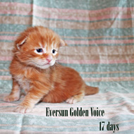 GV E-Kittens Eversun 1 23052015 small