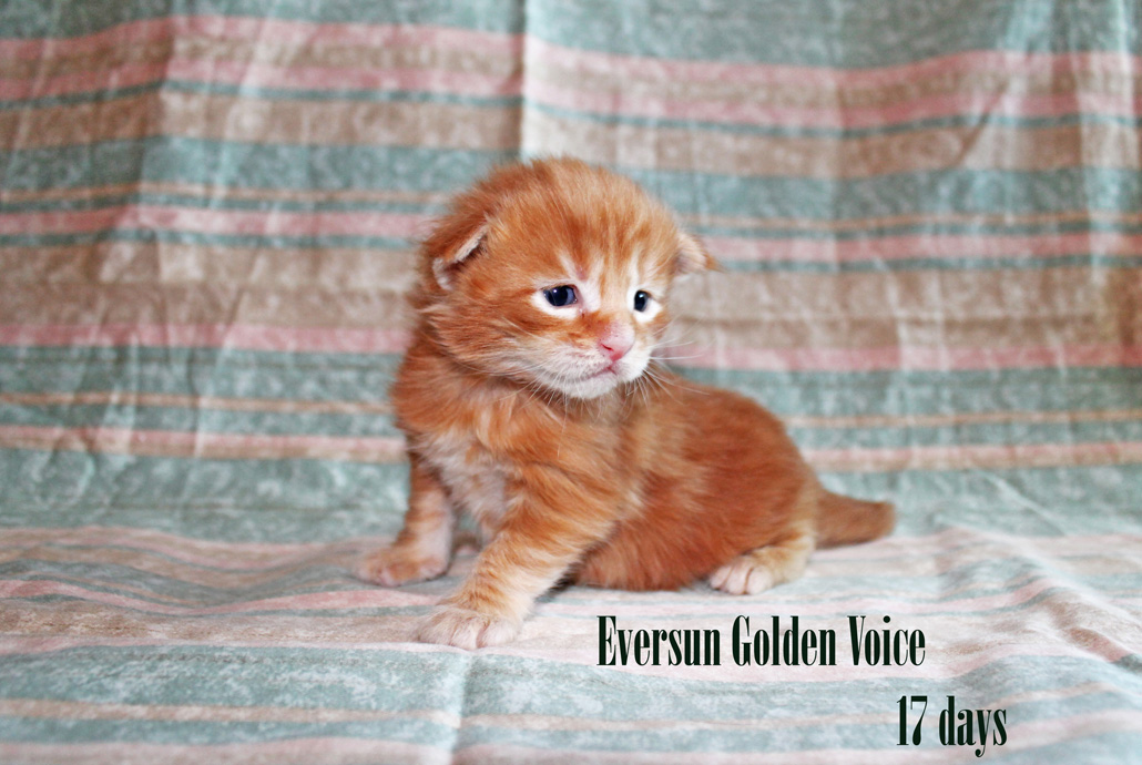GV E-Kittens Eversun 1 23052015