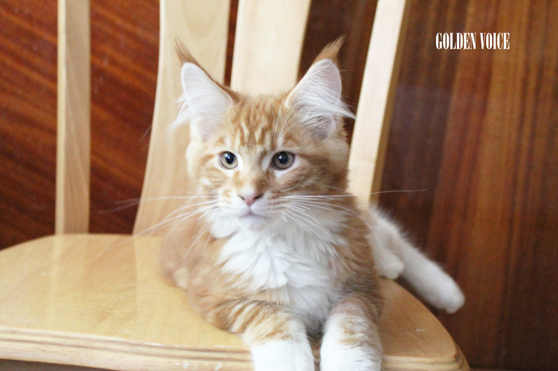 GV D-Kittens Dendy 1 20140619 small