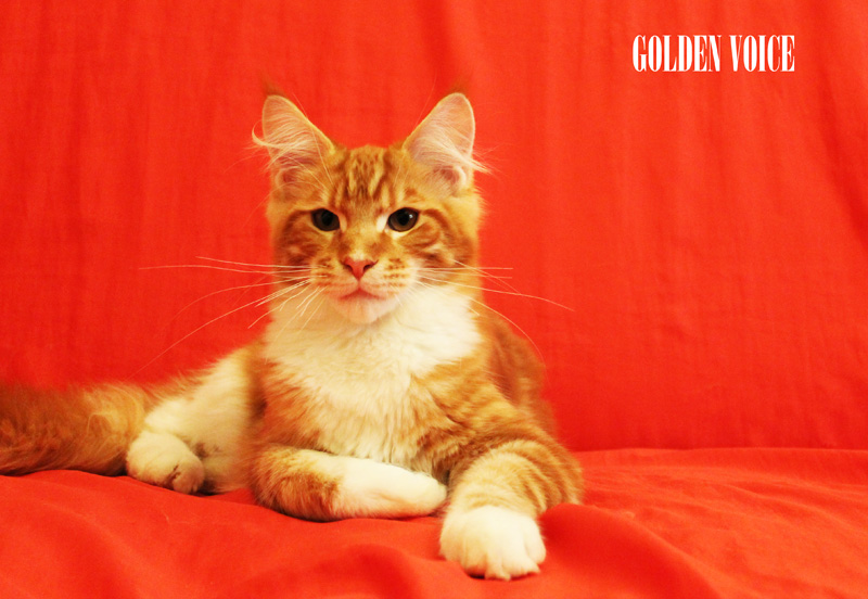 GV D-Kittens Dendy 2 07072014 small