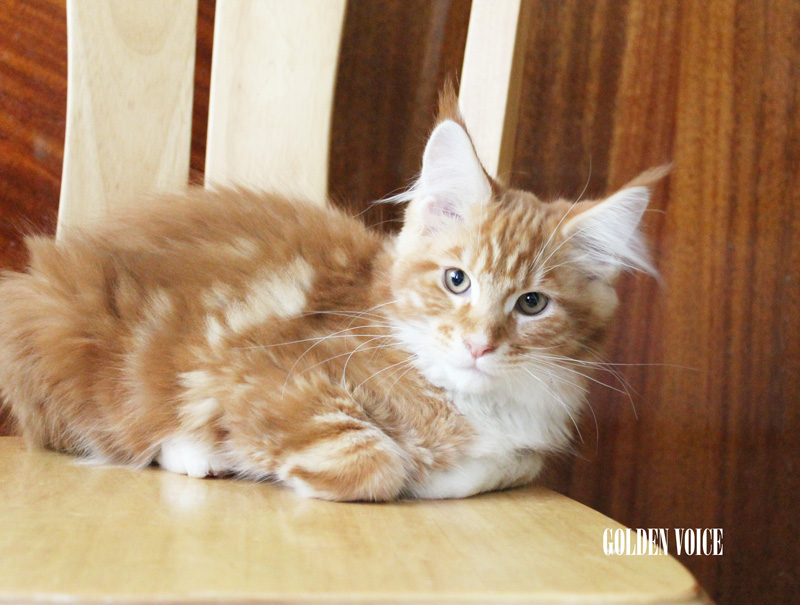 GV D-Kittens Dendy 2 20140619 small