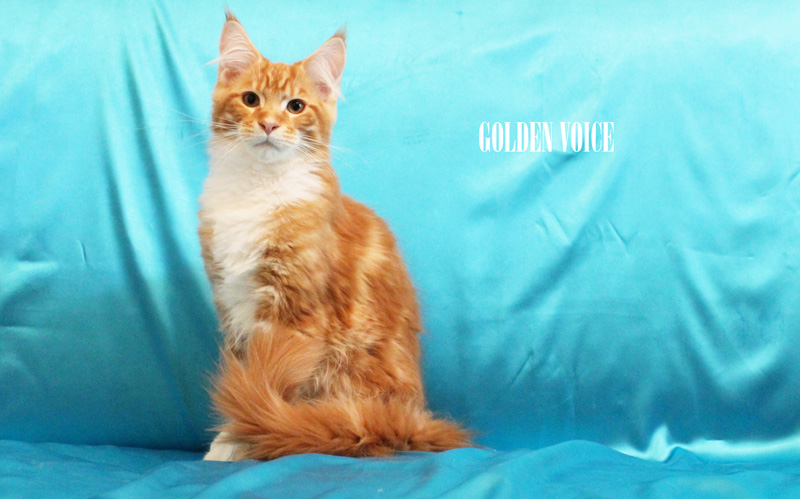 GV D-Kittens Dendy 5 20140619 small
