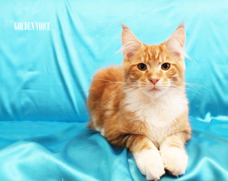 GV D-Kittens Dendy 6 20140619 small